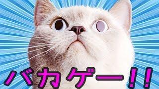 getlinkyoutube.com-部屋の破壊神「猫」 - バカゲー 実況プレイ