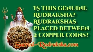 getlinkyoutube.com-Is this genuine Rudraksha? Rudrakshas placed between 2 copper coins.