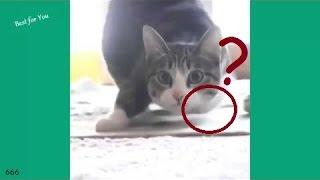 getlinkyoutube.com-gatos engraçados compilação ( cuteness alert)