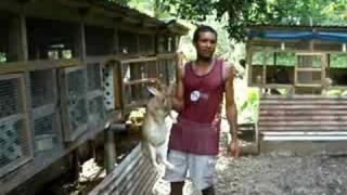 getlinkyoutube.com-Rabbit Project, Rabbit Farming Demonstration to Peace Corps