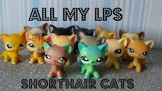 All My LPS Shorthair Cats || Lps Savvytv