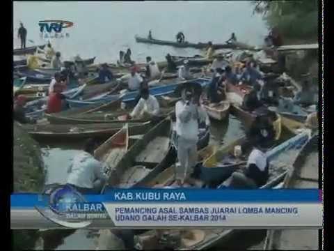 Via TVRI berita LOMBA MANCING UDANG GALAH SE-KALBAR 2014 DI RASAU JAYA