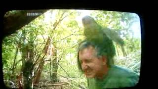 Mark Carwardine gets raped by rare parrot!