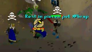 Rip Scorpia Pet
