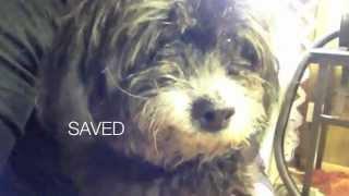 flushyoutube.com-Arizona Small Dog Rescue saves dogs from LA kill list
