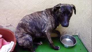 flushyoutube.com-Rhianna's rehab at North Clwyd Animal Rescue