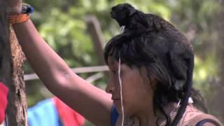 getlinkyoutube.com-Breastfeeding Monkeys: Human Planet - Jungles