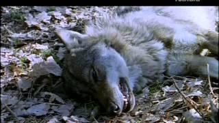 getlinkyoutube.com-Las montañas del lobo.