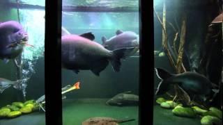 getlinkyoutube.com-Jack Heathcote's giant tropical aquarium