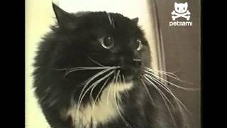 getlinkyoutube.com-Talking cat says Oh Long Johnson