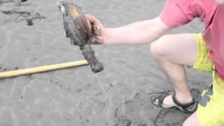 getlinkyoutube.com-Geoduck Clamming on Whidbey Island