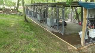 getlinkyoutube.com-Rottweiler dog kennels Nashville Tennessee - Rottweiler breeders in TN - Rottweiler puppies