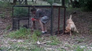 getlinkyoutube.com-Hog Trap 23: The Heat Is ON!!!