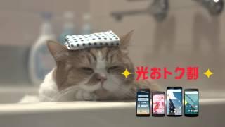 getlinkyoutube.com-Y!mobile CM ふてニャンシリーズまとめ 15秒~60秒