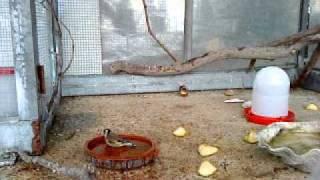 getlinkyoutube.com-voladera de daniel 2-01-2011.MP4