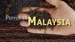 getlinkyoutube.com-Malaysia to more than double current pepper production & export levels by 2020