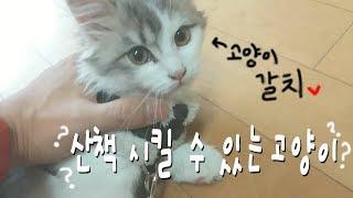 getlinkyoutube.com-[대정령] 산책 시킬 수 있는 고양이