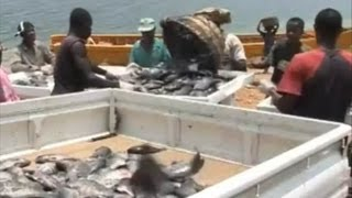 getlinkyoutube.com-Fish farming in Ghana -Development challenges