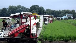 2012 08 24始まった人参収穫