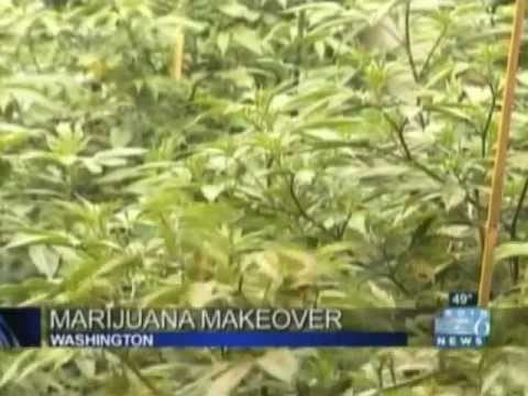 Marijuana Makeover - KOIN6 - 12/4/12