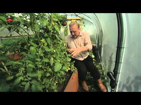 Trickle Irrigation inside a Polytunnel - V57