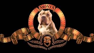 getlinkyoutube.com-MGM Lion Custom Intro - American Bully dog