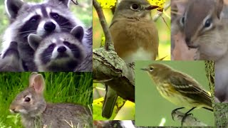 getlinkyoutube.com-BEST Video For Cats Ever!  Birds,Chipmunks, Squirrels, and Rabbits,