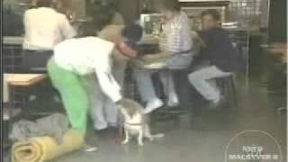getlinkyoutube.com-Pegadinha   Ivo Holanda pede Coxinha e da para o Cachorro e apanha