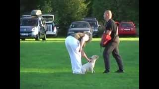getlinkyoutube.com-Bull Terrier Miniature Defence