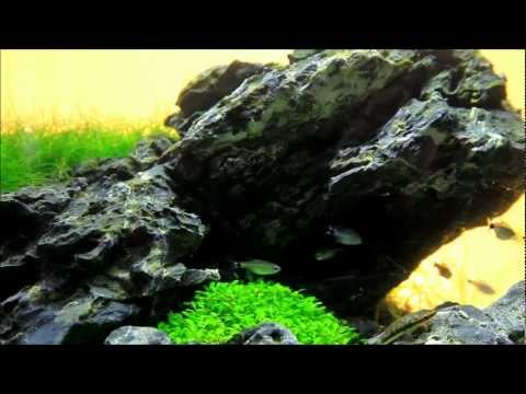 Just Aquascaping - Mini M Iwagumi