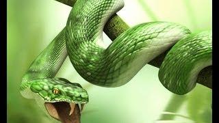 getlinkyoutube.com-الأفاعي العاصره وثائقي