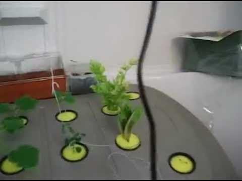 Aeroponic system home made part 10