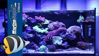 getlinkyoutube.com-Marine Depot Featured Tank: CAD Lights Artisan 70 Gallon Reef Tank
