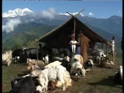 Gurung flim song''Kashi''ngala maya ngai kashi..