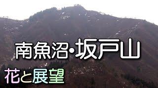 getlinkyoutube.com-南魚沼 坂戸山。兼続の居城と山野草の山。