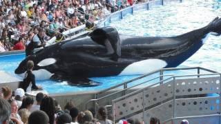 getlinkyoutube.com-SeaWorld's Killer Whale's Splashing Visitors (in 2009)