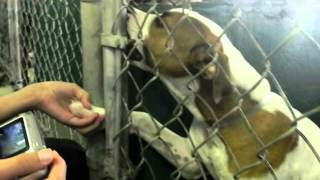 Save a life...Make shelter pet adoption your only option