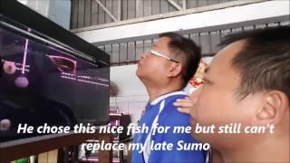 getlinkyoutube.com-LIOW VIDEO: Selecting my last Arowana fish 挑选龙鱼