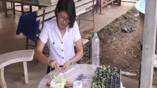 getlinkyoutube.com-ปลูกผักในขวดน้ำ