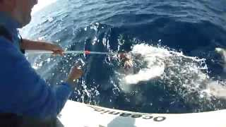 getlinkyoutube.com-Ψαρεμα θραψαλων στα βαθεια. 9 kg giant squid fishing