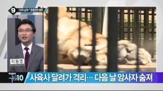 getlinkyoutube.com-동물원 불곰과 암컷 사자의 '혈투'…암사자 결국 숨져