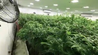 getlinkyoutube.com-Medicrop Ep: 20 A look in the drying room