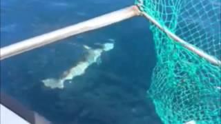 getlinkyoutube.com-상어낚시(Shark fishing)
