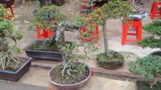 getlinkyoutube.com-Chợ cây cảnh Hà Đông