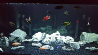 getlinkyoutube.com-Aquarium Temperature Tip!