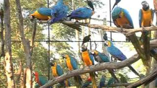 BANGKOK SAFARI WORLD -FULL DAY TOUR- ORIGINAL