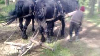 getlinkyoutube.com-cai lui miki moieciu 8