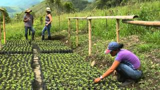 getlinkyoutube.com-Producción de Maracuyá en Escuela de Campo