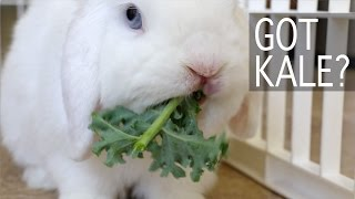 Bunny Goes Crazy for Kale!