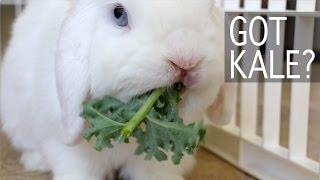 getlinkyoutube.com-Bunny Goes Crazy for Kale!